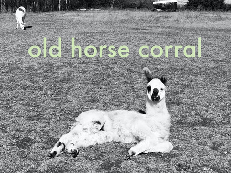 E.P Review - Covers - Old Horse Corral - 2020