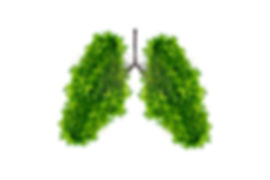 Lung green tree-shaped images, medical c