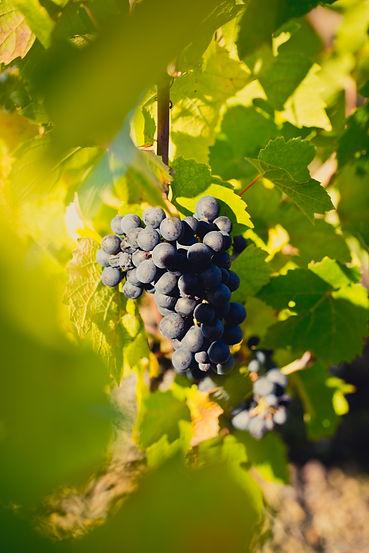 Vins rouges Domaine du Père