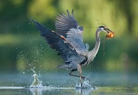 BIRD PHOTOGRAPHY EXHIBIT