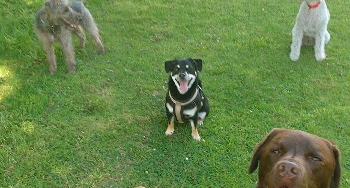 Team Photo_#Turbo, #bertiethebedlington, #Rusty #Noah & #Max_#DogWalkers #dogsofinstgram
