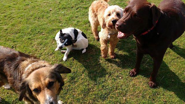 #Lacey #Vinnie #Noah & #Max #TeamPhoto _#worthing #dogsofinstgram  #SunnyWorthing #sunnysouthcoast