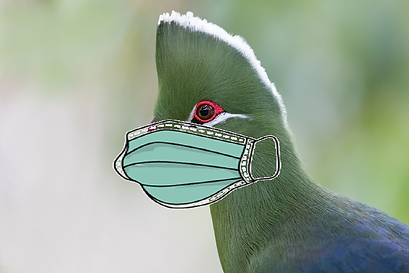Turaco mask.png