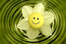 blossom-233838_1920.jpg