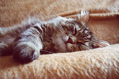 sleeping-cat-2754329_1920.jpg