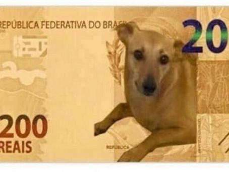 Banco Central estuda colocar vira-lata caramelo na nota de R$ 200