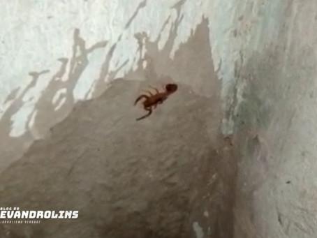 Aparição de escorpiões preocupa moradores de Toritama