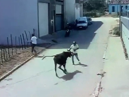 Homem morre após ser atacado por um boi em Surubim
