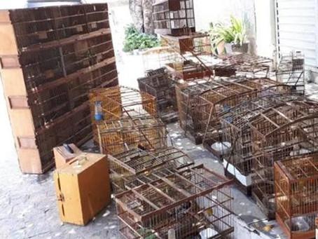 MPPE e CPRH resgatam mais de 100 aves e jabutis em Taquaritinga do Norte