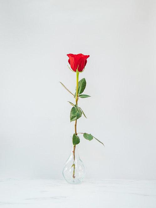 Polska Róża od producenta