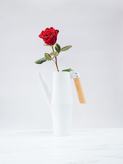Róża Ekwador