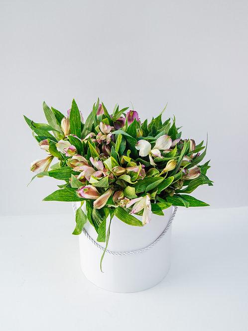 Flower Box Astromeria