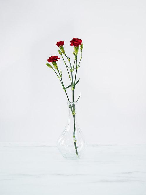 Goździk (Dianthus) gałązkowy