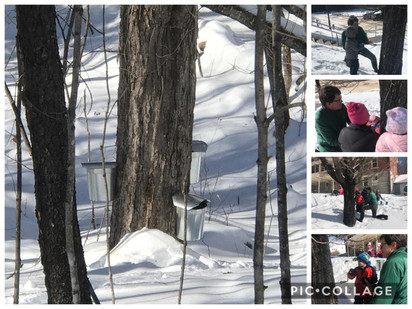 Tapping our maple trees with Mr. Bob