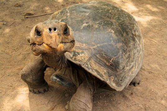 Identifying tortoises