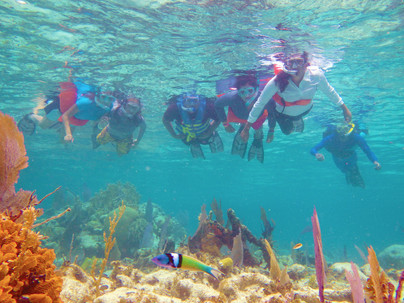 Snorkel the Cayes