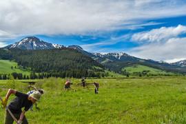 Restore Native Wildlands