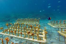 Reef Restoration Workshop