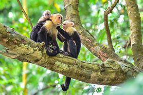 Felines & Primates
