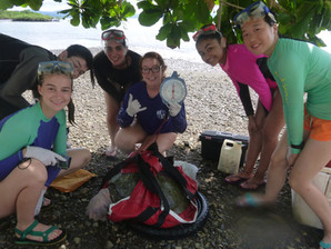 Hands-on Research with Sea Turtles