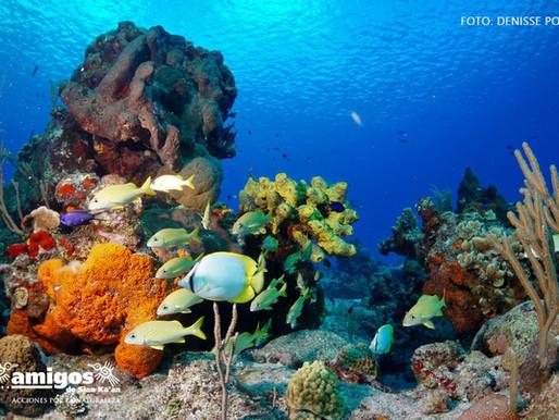 Impulsan la Profesionalización del Sector Turístico de Q.Roo para Incidir en la Conservación del SAM