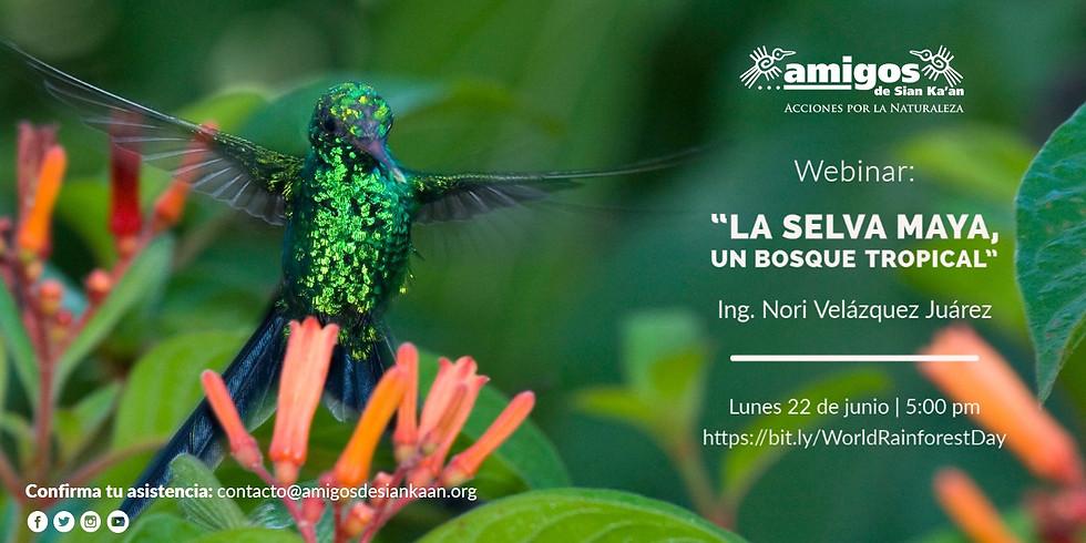 Webinar: «La Selva Maya, un Bosque Tropical»