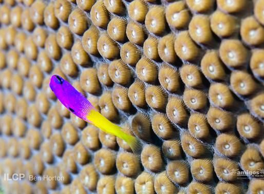 """Participa en el Primer Concurso de Fotografía """"Monitores del Arrecife"""""""