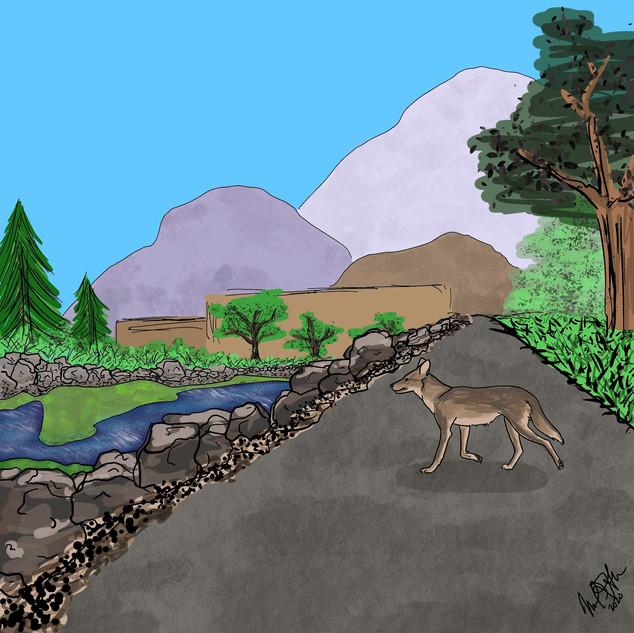 SoCal Coyote
