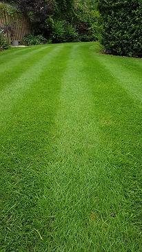 Lawn Mowing | Grass Cutting