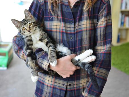 Cat Family Story #10: Diego