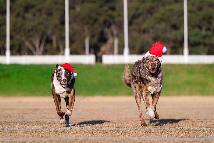 Christmas Action Promo-0004.jpg