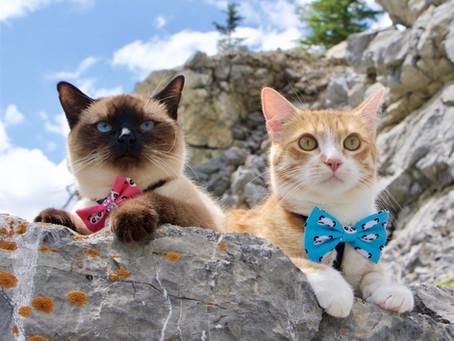 Cat Family Story #9: Garfield and Domino