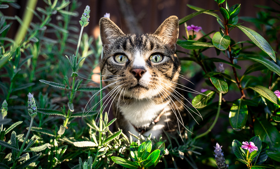 Cat-with-flower-at-Sydney-home