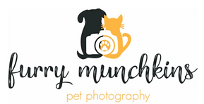 Furry Munchkins Pet Photography Lane Cove Pet Photographer