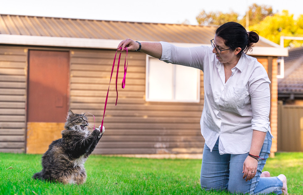 Cat-playing-with-ribbon