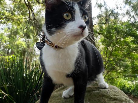 Cat Family Story #13: Pepi