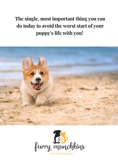 Photo Cover of Ebook for new puppy owners in Sydney