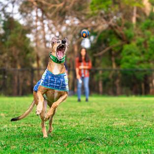 Millie & Diesel-0043.jpg