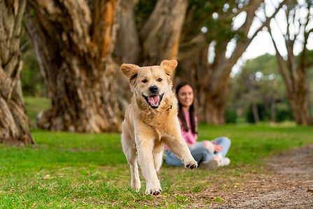 Dog Portrait taken by a dog Photographer located in Sydney at one of the most beautiful parks