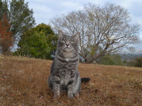 Cat Family Story #14: Milo
