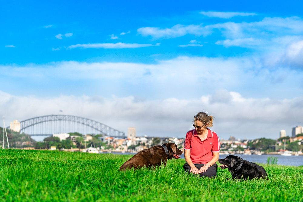 Woman-and-labradors-Sydney-Harbour-Bridge