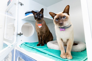 Parramatta-Veterinary-Hospital-cat-boarding