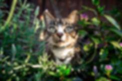 Cat in flower bush Sydney Cat Photograph