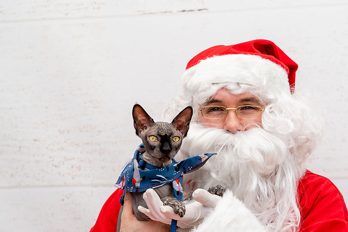 Christmas-Santa-Photos-Cat-Lane-Cove.jpg