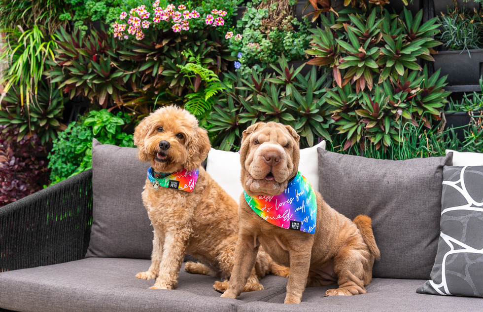 Two-dogs-posing-for-the-camera