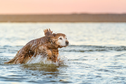 Beach-photo-of-dog-emerging-from-water