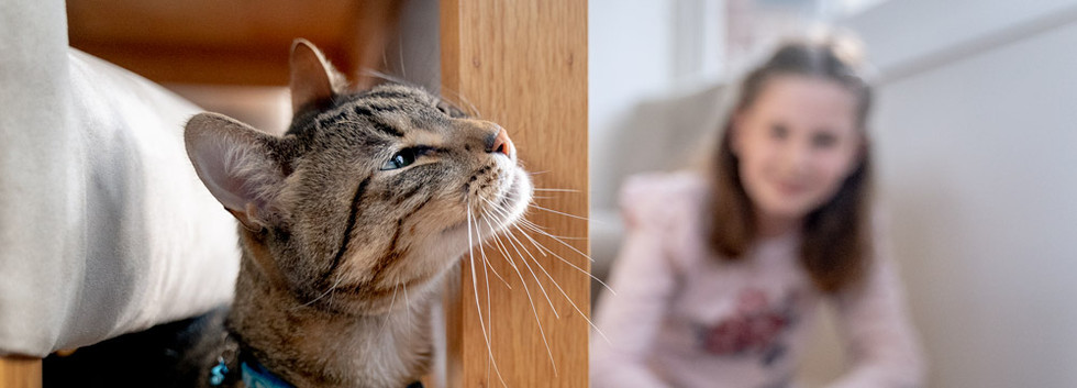 Cat-inside-home-with-girl.jpg