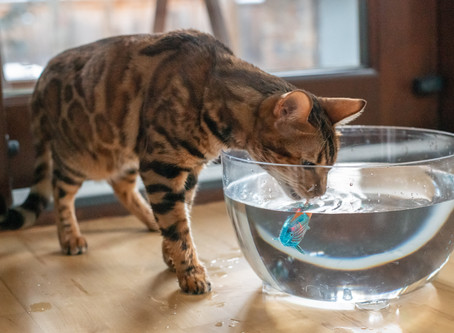 19 Actionable Enrichment Ideas That Will Keep Your Cat Healthier and Happier Today