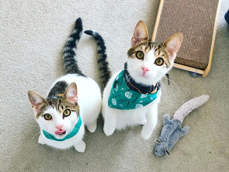 Cat Family Story #11: Bruce and Clark
