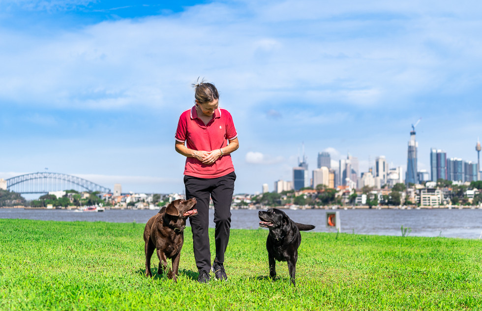 Family-with-dogs-walking-in-Sydney-Park